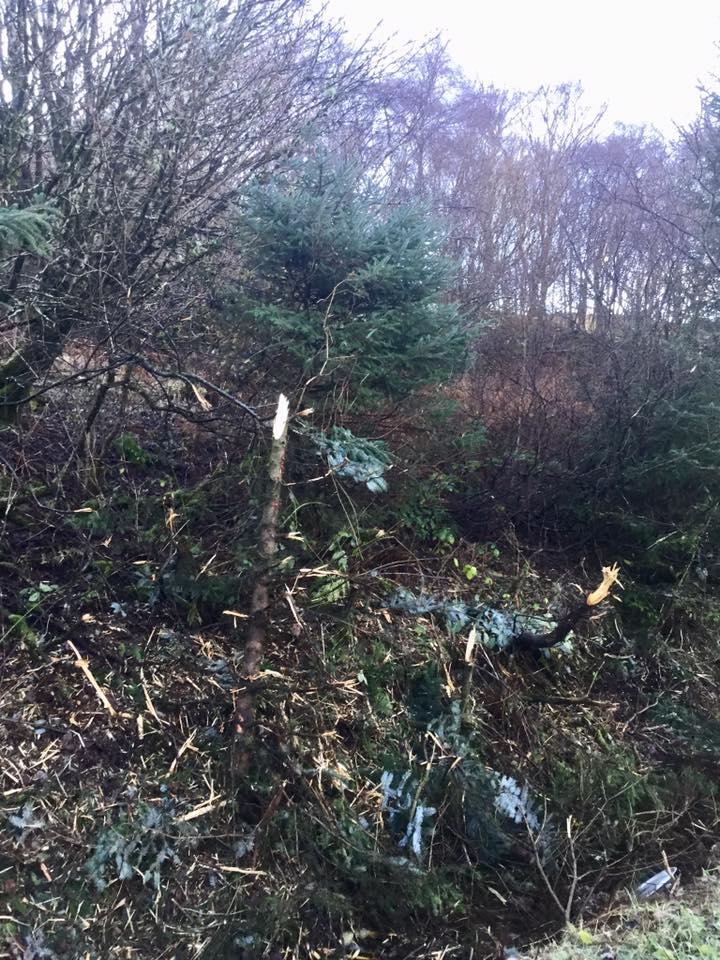 5157fe426f46 Road danger alert over cut trees